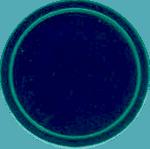 Schnapparmbänder Lagerfarbe 38